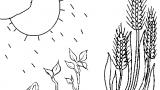 La semence qui se développe toute seule (Mc 4,26-34)