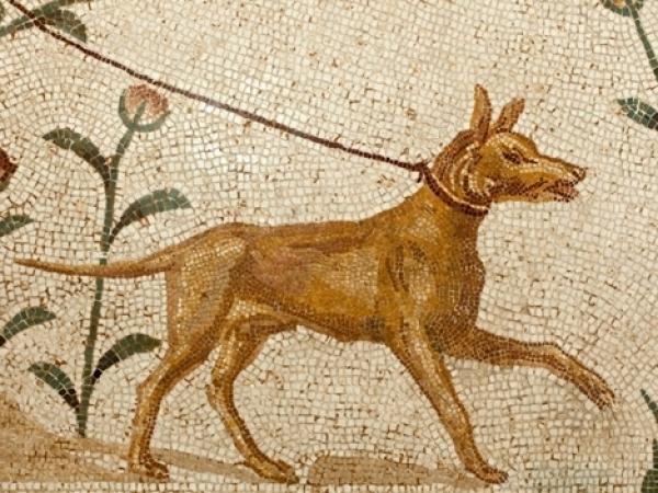 Le chien de César
