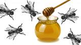 Miel ou vinaigre ? (Mt 12,14-21)